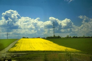 Austrian field of yellow